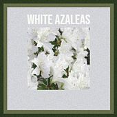 White Azaleas by Various Artists