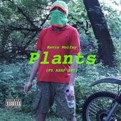 Plants de Kevin Wolfay