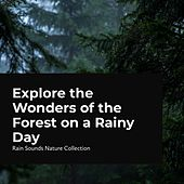 Explore the Wonders of the Forest on a Rainy Day by Rain Sounds Nature Collection