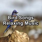 Bird Songs Relaxing Music von Yoga