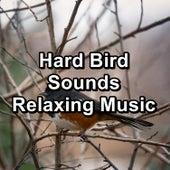 Hard Bird Sounds Relaxing Music von Yoga