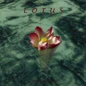 Lotus by Stephanie Sante