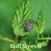 Boll Weevil by The McGuire Sisters, Margot Loyola, Arsenio Rodriguez, Stanley Black, Frankie Avalon, Amalia Mendoza, Buck Owens, Tex Ritter, Charlie Rich