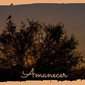Amanecer by ACTI 2-4 Grooves