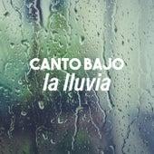 Canto bajo la lluvia de Various Artists