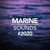 Marine Sounds 2020 by Ocean Sounds (1)