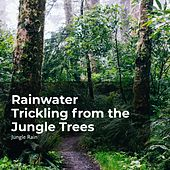 Rainwater Trickling from the Jungle Trees von Deep Rain Sampling