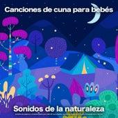 Canciones de cuna para bebés:  Sonidos de la naturaleza, sonidos de pájaros y música suave para dormir para bebés, ayuda para dormir y música tranquila para dormir de Musica Para Dormir Bebes