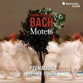 Johann Sebastian Bach: Motets de Pygmalion