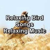 Relaxing Bird Songs Relaxing Music by Spa Music (1)