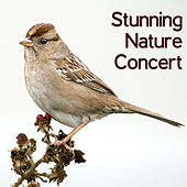 Stunning Nature Concert – Piano & Birds Sounds Collection, Mother Nature, Healing Therapy, Water & Rain, Woodland Escape, Feel Better with Amazing New Age Music, Relaxation by Mothers Nature Music Academy Restful Music Consort