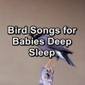 Bird Songs for Babies Deep Sleep by Spa Relax Music