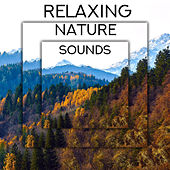 Relaxing Nature Sounds - Ambient New Age Music, Keep Calm with Nature Sounds, Pouring Rain, Woodland Escape, Bird Calls, Blue Skies, Healing Therapy by Nature Music Sanctuary Relaxed Mind Music Universe