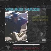 ASINTOTA de Young Haze