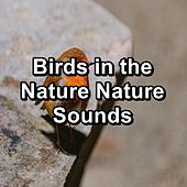 Birds in the Nature Nature Sounds von Yoga