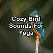 Birds Chirping Nature Sounds by Spa Relax Music