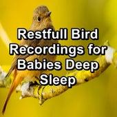 Restfull Bird Recordings for Babies Deep Sleep by Spa Music (1)