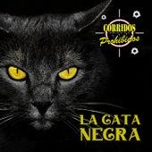 Corridos Prohibidos: La Gata Negra by German Garcia
