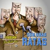Corridos Prohibidos: Son Unas Ratas by German Garcia