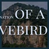 Reincarnation of a Lovebird by Stevie Wonder, Rosemary Clooney, Memphis Slim, Charles Mingus, Albert King, Victor Young, Kenny Rogers, Ahmad Jamal, Mikis Theodorakis, Artie Shaw