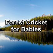 Forest Cricket for Babies by Nature Ambience