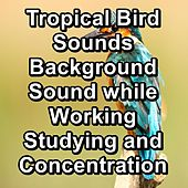 Tropical Bird Sounds Background Sound while Working Studying and Concentration von Yoga