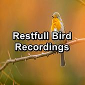 Restfull Bird Recordings by S.P.A