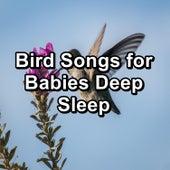 Bird Songs for Babies Deep Sleep von Yoga Music