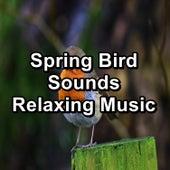 Spring Bird Sounds Relaxing Music von Yoga Music
