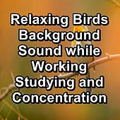 Relaxing Birds Background Sound while Working Studying and Concentration von Yoga Music