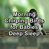 Morning Chirping Birds for Babies Deep Sleep by S.P.A