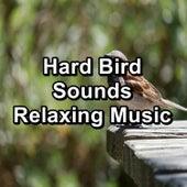 Hard Bird Sounds Relaxing Music von Yoga Music