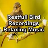Restfull Bird Recordings Relaxing Music von Yoga Tribe