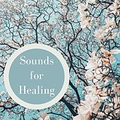 Sounds for Healing: Soothing Music Therapy Sounds by Various Artists