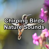 Chirping Birds Nature Sounds von Yoga