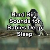 Hard Bird Sounds for Babies Deep Sleep by Nature Sounds (1)
