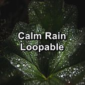 Calm Rain Loopable by Nature Sounds (1)