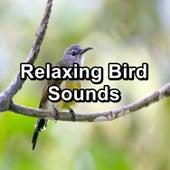 Relaxing Bird Sounds von Yoga Tribe