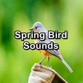 Spring Bird Sounds von Yoga Shala