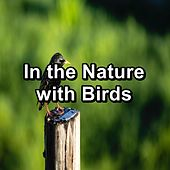 In the Nature with Birds von Yoga