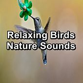 Relaxing Birds  Nature Sounds by Spa Music (1)