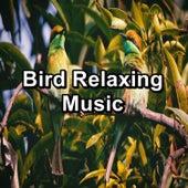 Bird Relaxing Music von Yoga