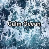 Calm Ocean by Ocean Live