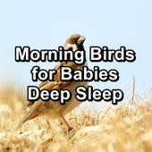 Morning Birds for Babies Deep Sleep by Spa Music (1)
