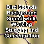 Bird Sounds Background Sound while Working Studying and Concentration de Sleep