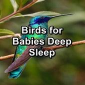 Birds for Babies Deep Sleep von Yoga