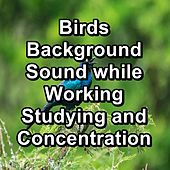 Birds Background Sound while Working Studying and Concentration von Yoga Shala