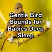 Gentle Bird Sounds for Babies Deep Sleep von Yoga Music