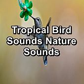 Tropical Bird Sounds Nature Sounds by Spa Music (1)