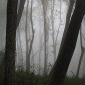 Niebla von Chule
